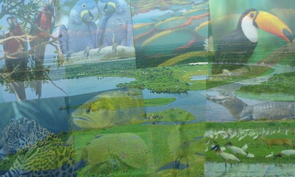 Belezas,Riquezas e Atrativos do Pantanal em Exposição